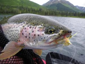 Fly Fishing fresh and saltwater is my other hobby (obsession) .Wheter here in Alaska or the tropics ...Wheter here in Alaska or the tropics ...
